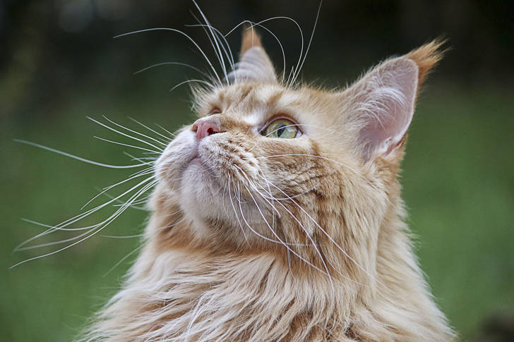 Ginger cat looks to the sky