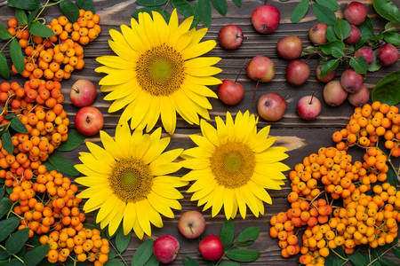 Sunflowers with apples and rowan