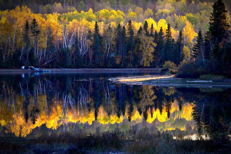 Autumn Canadian Forest Landscape