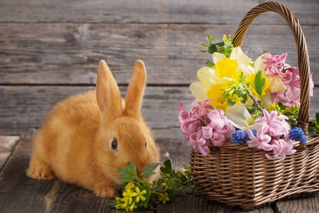 Rabbit and basket with flowers