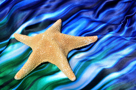 Starfish on an azure background