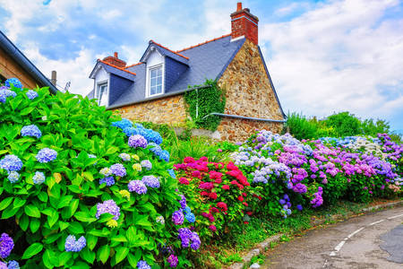 Village house in flowers