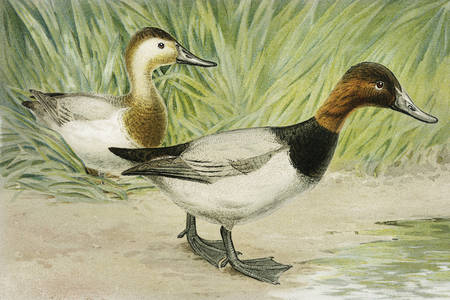 Ducks in painting