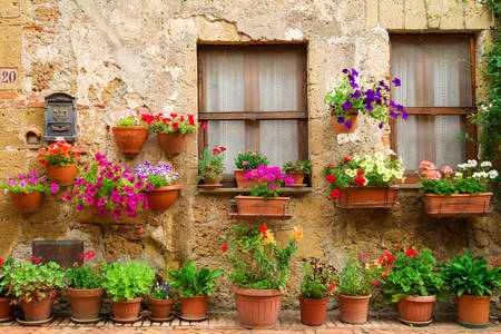 Flower houses in Spello