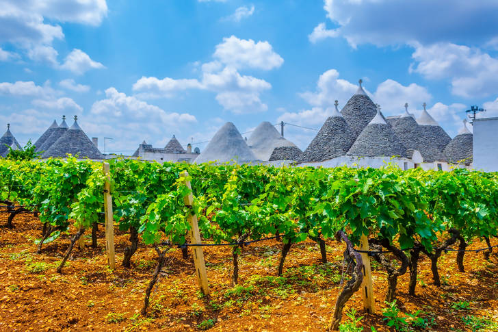 Vineyards in Alberobello