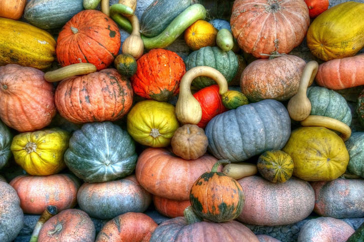 Colorful pumpkin harvest