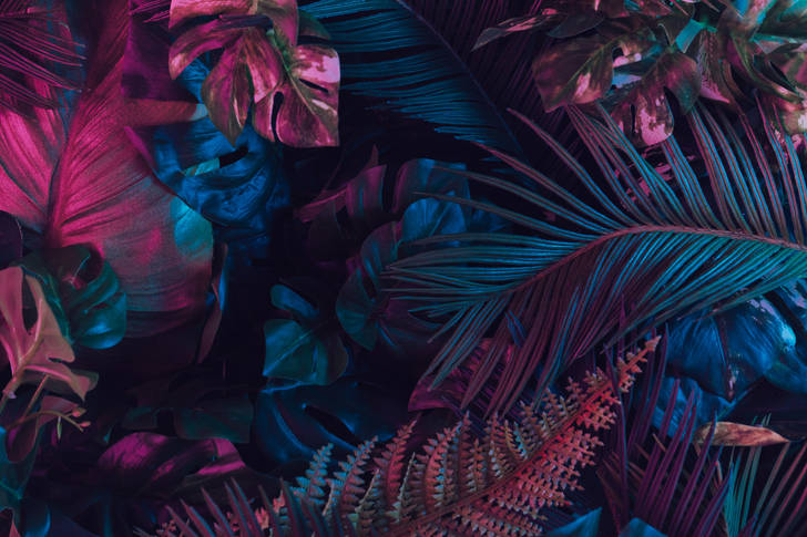 Abstraction from tropical leaves