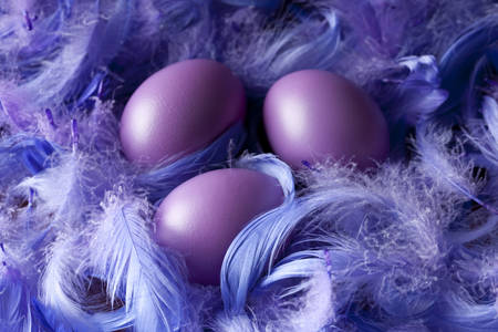 Easter eggs on a background of feathers