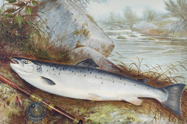 Trout chromolithography