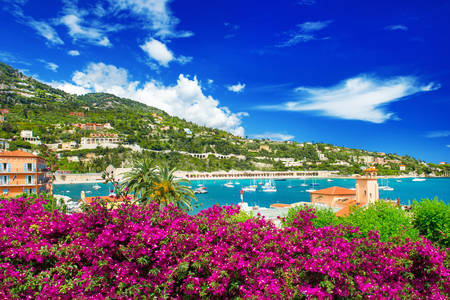 French Riviera with azalea flowers