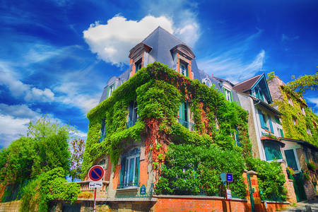 The ivy-covered facade of a Parisian building