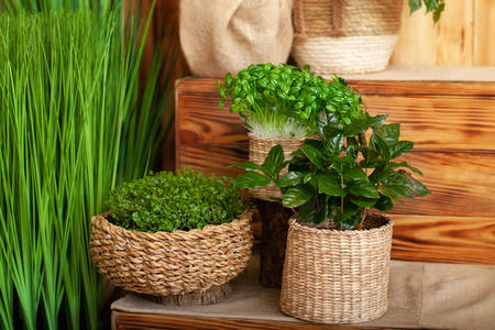 Houseplants on wooden shelves