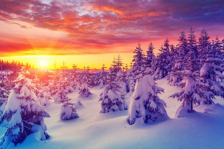 Winter sunset in the Carpathians
