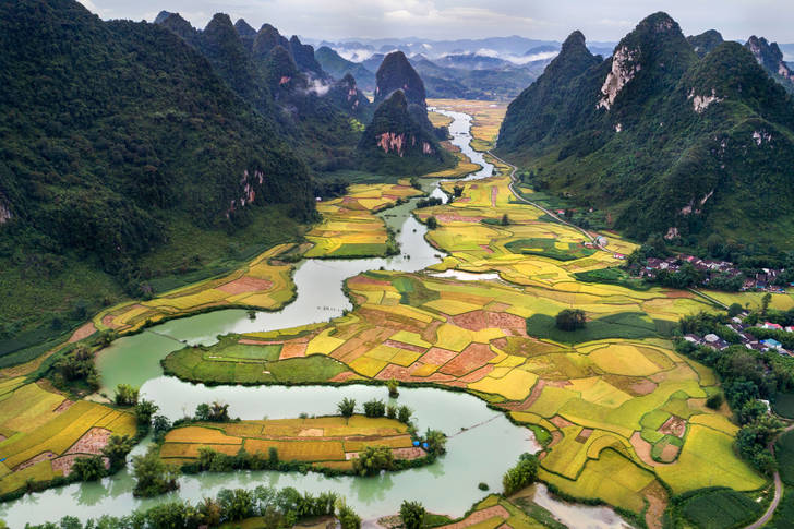 Rice fields along the river