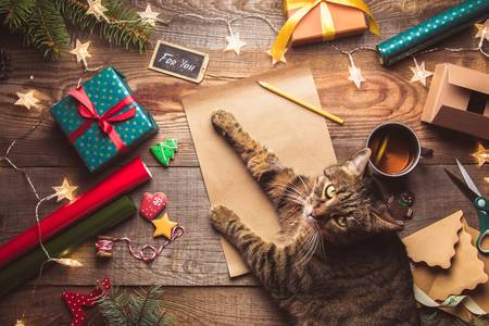 Cat in christmas gifts