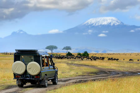 Masai Mara Wildlife Safari