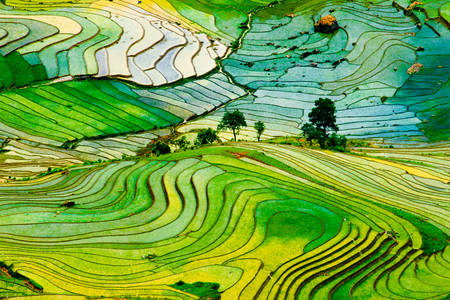 Rice fields in Laocai province