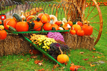 Decorations with pumpkins for the autumn holiday