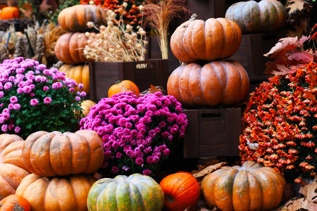 Decor with pumpkins and flowers