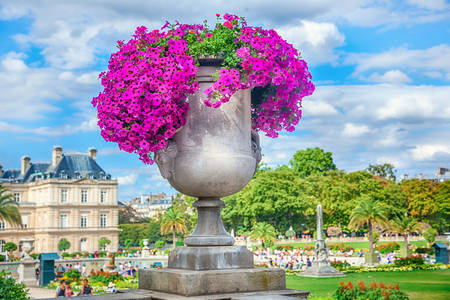 Flowerpot in the Luxembourg Gardens