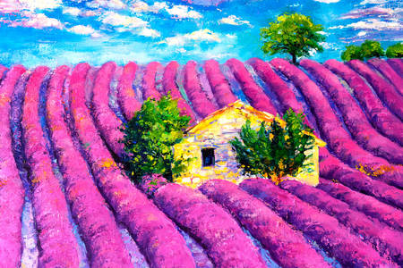 House on a lavender field