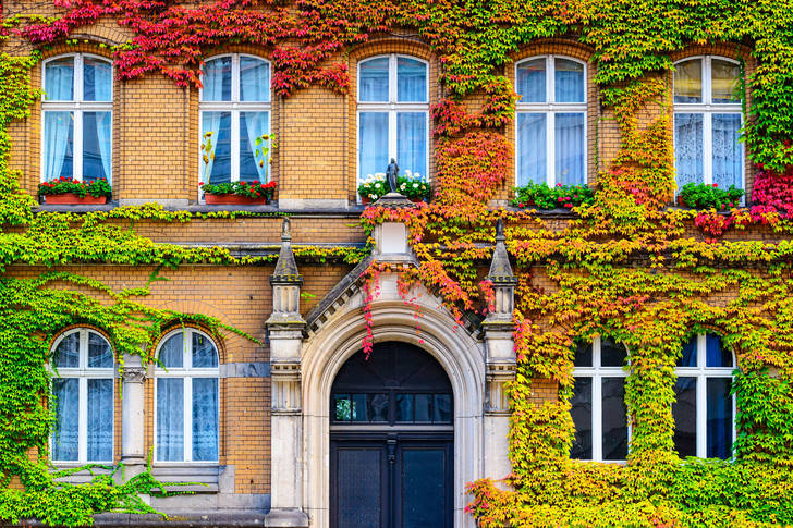 The facade of the building covered with vines