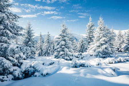Carpathians in the snow
